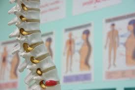 chiropractor 48911